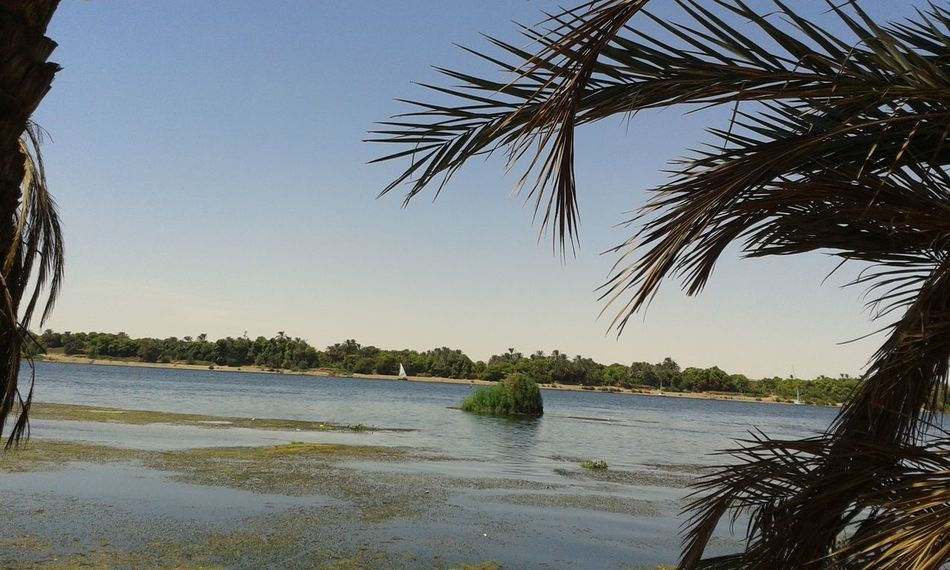 Beauty In Nature Clear Sky Egypt Nature No People Outdoors Palm Tree The Nile River Water