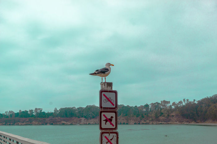 Animal Themes Animals In The Wild Avian Bird Cloud - Sky Day Nature On Top Of One Animal Outdoors Perching Pole Raven - Bird Riverbank Road Sign Seagull Signboard Sky Tranquility Water Wildlife Zoology