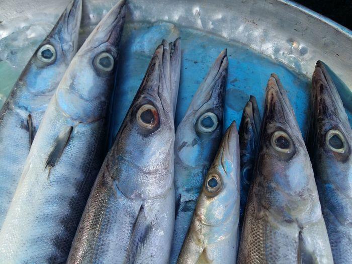 fresh fish on the market Sea Food Freshness Fish Eye Fish Market Animal Eye 17.62° The Foodie - 2019 EyeEm Awards The Mobile Photographer - 2019 EyeEm Awards