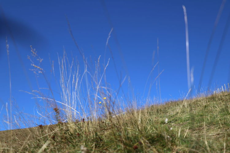 Grass on field against clear blue sky
