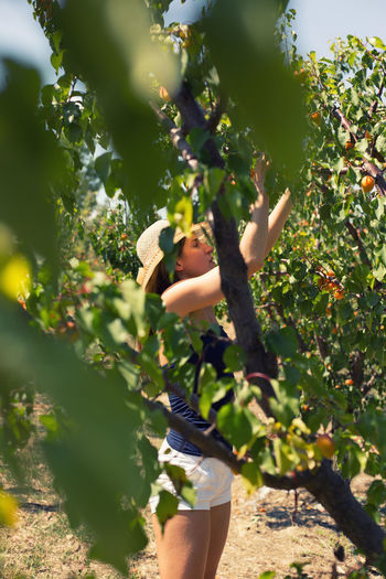 Side view of woman harvesting oranges at orchard