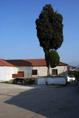 Public building with tree in Malakastra in Albania Albania Albanian View Architecture Blue Building Building Exterior Built Structure Clear Sky Day Nature No People Outdoors Public Building Sky Tree