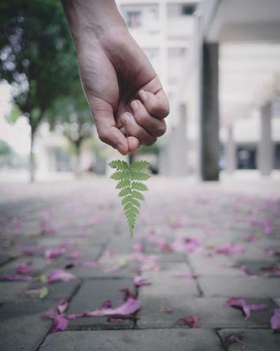 [8] 📷 .. Plant