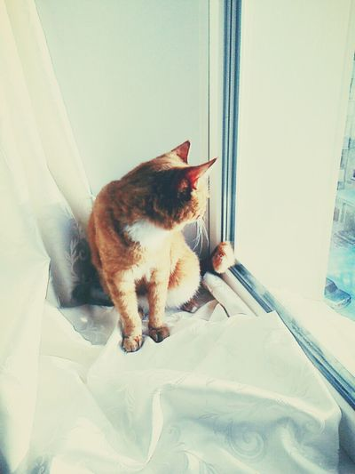 Beauty Around Us Darkness And Light Light And Shadow ♥ My Cat Peace