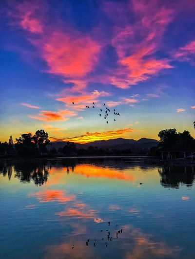 Sunrise at the lake Flying Sunset Bird Animals In The Wild Sky Flock Of Birds Mid-air Animal Themes Large Group Of Animals Reflection Beauty In Nature Silhouette Animal Wildlife Scenics Nature Cloud - Sky Migrating Outdoors Water Tranquil Scene