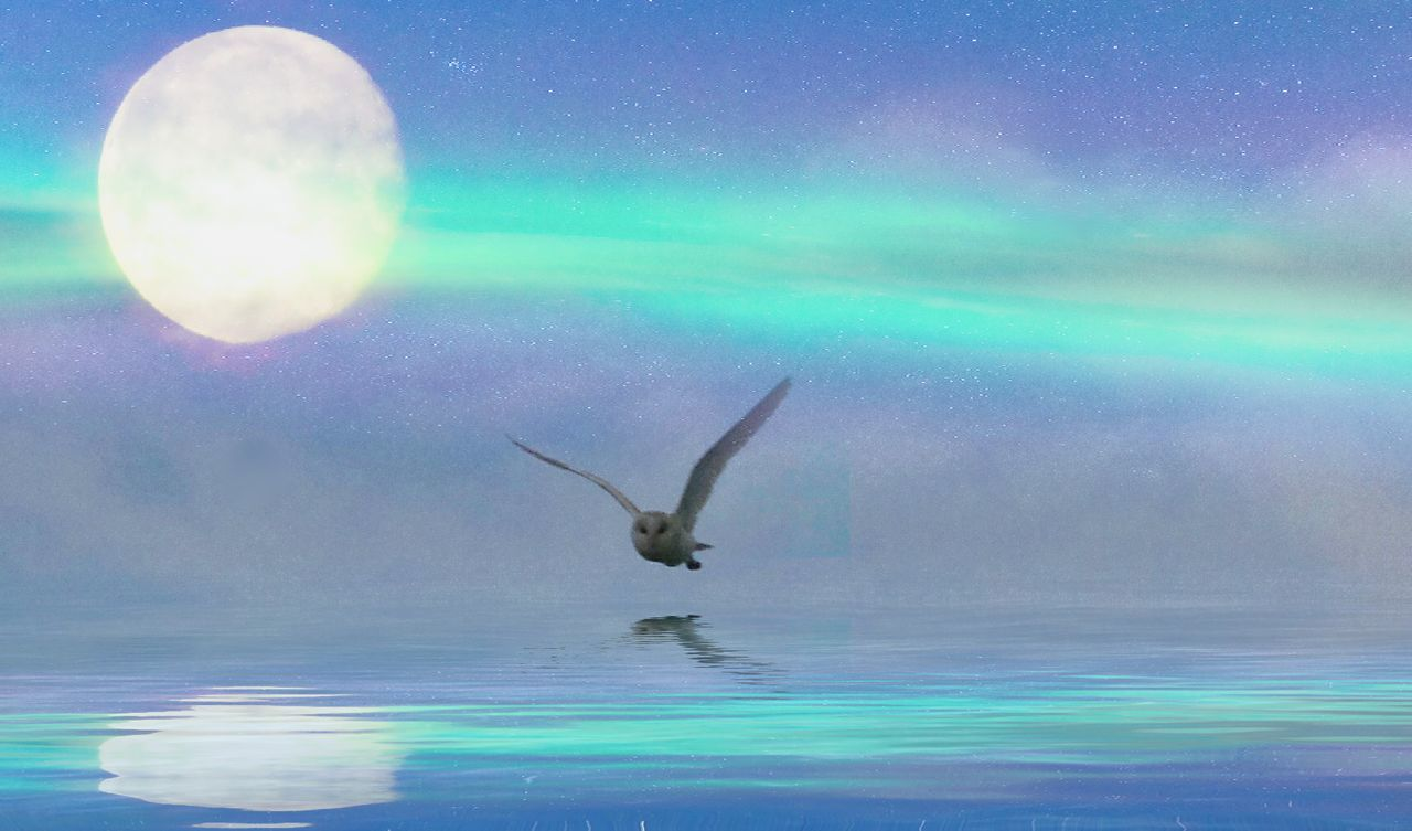 water, night, nature, reflection, moon, one animal, animal themes, sky, beauty in nature, animals in the wild, sea, outdoors, no people, motion, flying, sea life, swimming, mammal, undersea