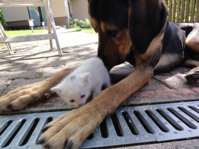 Animal Body Part Animal Head  Animal Themes Baby Cat Close-up Cuddling Day Dog Dog Vs. Cat Dogs Friends Frienship <3 ! Lying Down No People Outdoors Pets Relaxation Resting Taking Care Zoology