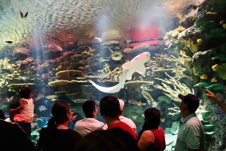People Watching Aquarium Photography Group Of People Real People Crowd Large Group Of People Celebration Men Women Leisure Activity Event Lifestyles Arts Culture And Entertainment Illuminated Adult Multi Colored Nature Motion Outdoors Looking Watching