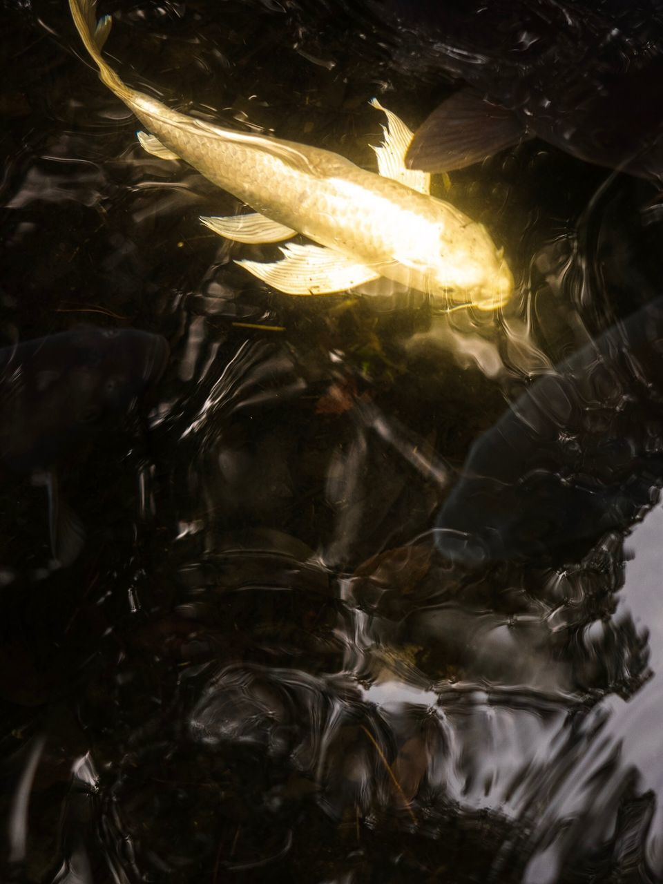 HIGH ANGLE VIEW OF FISH IN GLASS