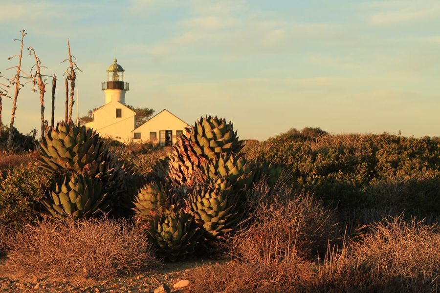 Lighthouse Cactus Cacti Lanscape Sunset Prairie Desert