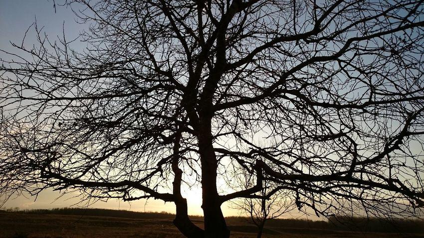 Tree Sunset Sun Blue Black