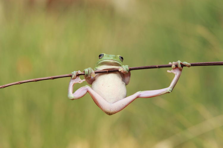 Gym Frogg Animal Themes Animal Wildlife Animals In The Wild Close-up Day Focus On Foreground Frog Macro Nature No People One Animal Outdoors Perching