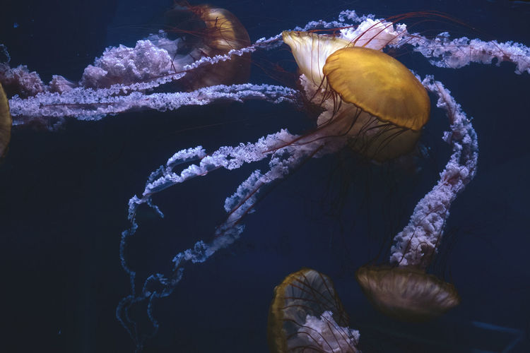 Captive jellyfish in the foreground underwater Animal Wildlife Animals In The Wild Sea Life Marine Underwater Invertebrate Sea Animal Themes Animal UnderSea Swimming Water No People One Animal Close-up Nature Jellyfish Aquarium Animals In Captivity Outdoors