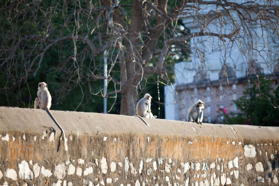 Animal Animal Themes Animals In The Wild Avian Bird Day Focus On Foreground Mammal Nature Perching Stone Material Three Animals Togetherness Wildlife Zoology