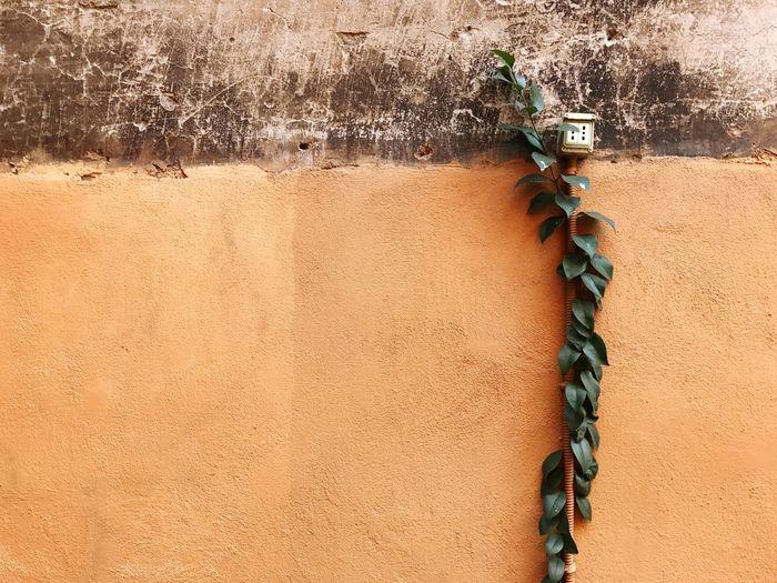 Plant growing against orange wall