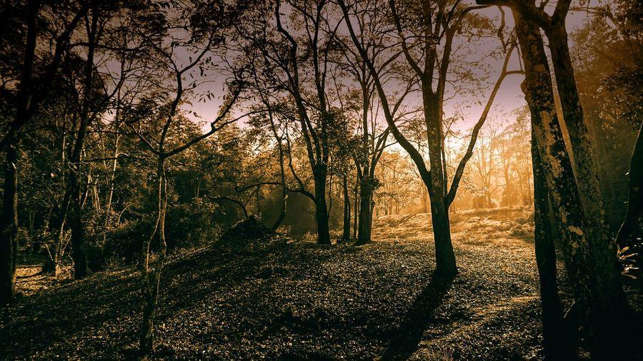 Beauty In Nature Scenics