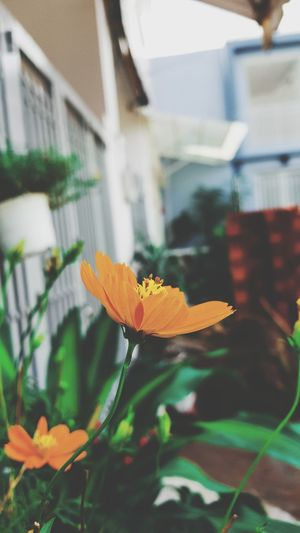 Flower Building Exterior Architecture Petal Fragility Flower Head Outdoors Built Structure Freshness Day Plant Nature Focus On Foreground Growth No People Close-up Beauty Backgrounds Phone Background Tree Autumn Iphone Background Blooming Beauty In Nature City