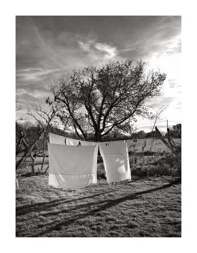 Filet dormant Drying Laundry Clothesline No People Field Tree Hanging Day Sky Outdoors Nature