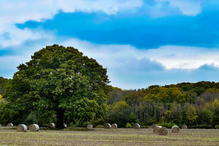 Hay Bale Hay Farmland Farm Life Farm Nature Outdoors Outdoor Photography Outside Landscape Cuntryside Tree Blue Sky Cloud - Sky Landscape Growing Tranquil Scene Tranquility Countryside Agricultural Field Grass Area