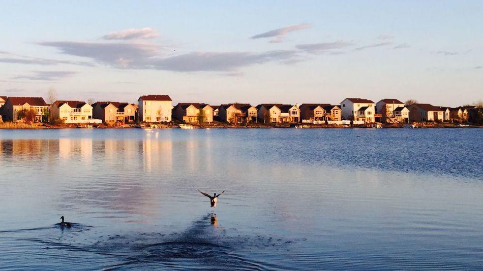 Lakeshore Lakelife Neighborhood Houses Catch The Moment Ducks At The Lake