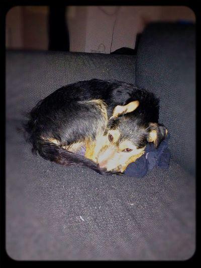 Mydog♡ Ilovemydog MyPuppy❤ Tierddog