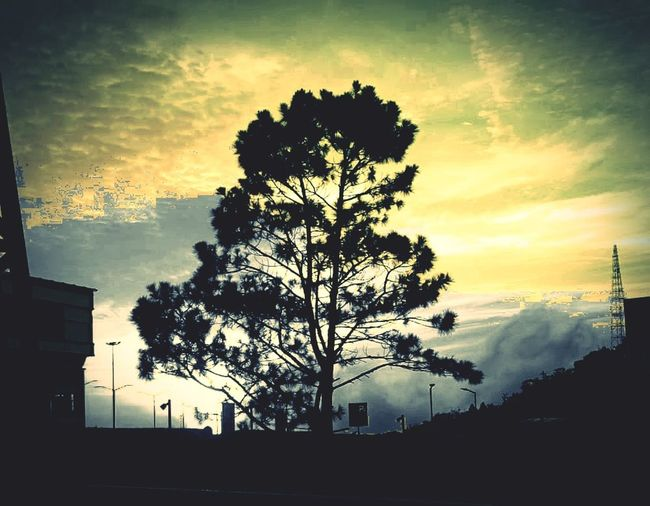 The only tree behind sunset Sunsettree Tree Sunset Palm Tree City Silhouette Pixelated Sky Cloud - Sky EyeEmNewHere My Best Travel Photo