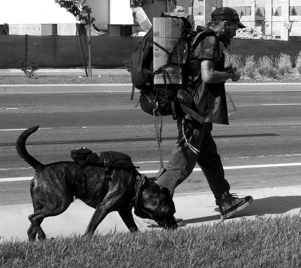 Homeless Homelessness  Dog Pit Bull Cross Walking Monochrome Blackandwhite Homeless Man Homeless Man And His Dog Streetphotography
