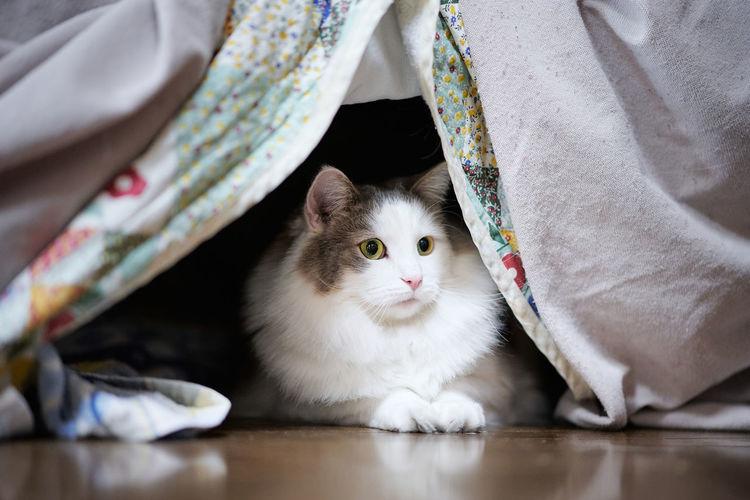 White cat sitting under a sofa