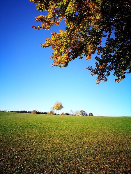 #autmn #autmn #fall #goldentimes #goodwheater #leaves #tree #lonely #colourfull #bluesky #noclouds