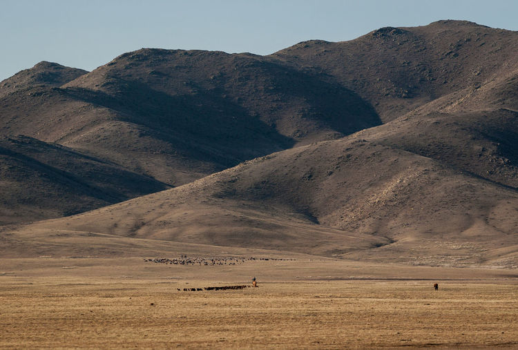 Shepherd with herd of horses, in wild mongolian steppe. Big hills on background Horses Mongolia Animal Themes Day Desert Landscape Mammal Mountain Mountain Range Nature Outdoors Scenics Steppe Tranquility Wild Wild Mongolia