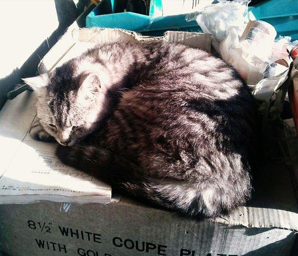 猫 ひなたぼっこ Cat Animal
