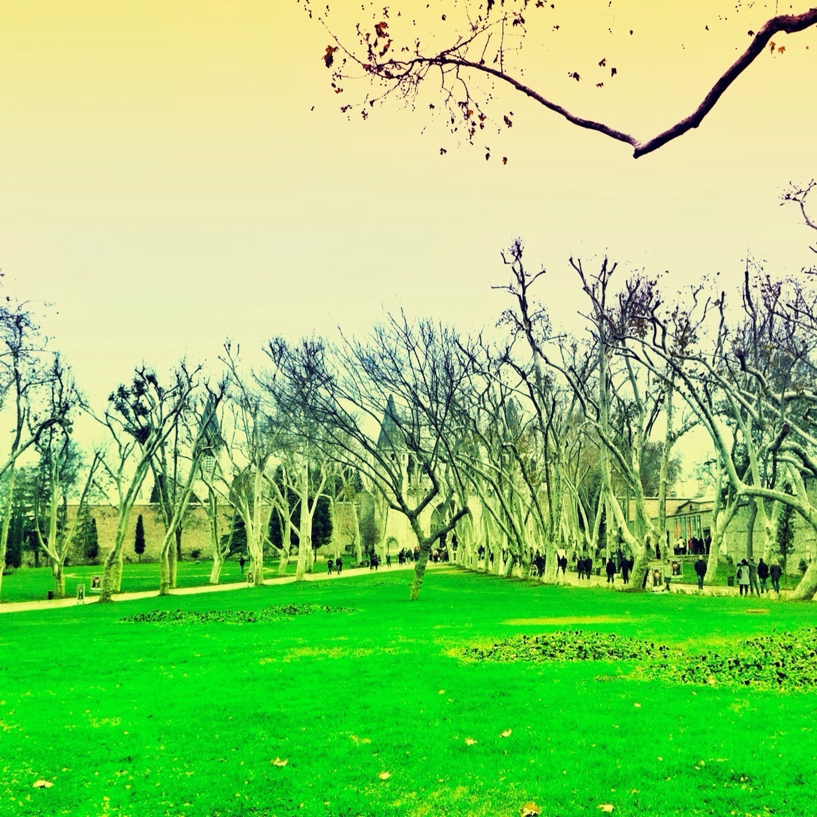 tree, grass, tranquil scene, tranquility, landscape, green color, clear sky, scenics, field, branch, nature, beauty in nature, bare tree, grassy, growth, tree trunk, park - man made space, sky, outdoors, idyllic