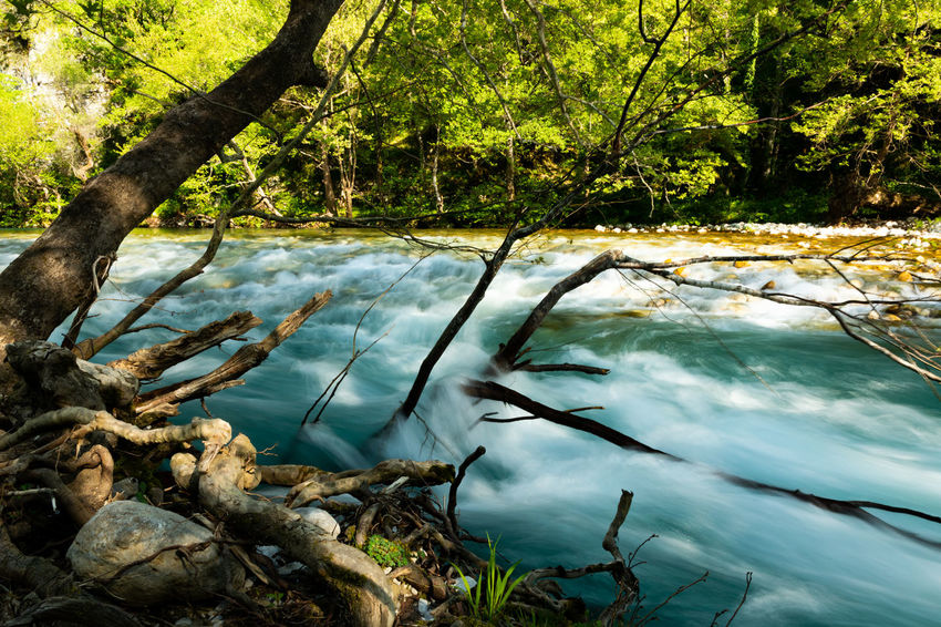 Rapids in the crystal clear waters of the River Voidomatis in Northern Greece Nature Nature Photography Northern Greece Trees Vikos Aoos Voidomatis Beauty In Nature Dynamic Fast Flowing Fast Flowing Water Forest Greece Long Exposure Rapids River River And Trees River Bank  River Photography Water Water Movement Wild Wilderness The Great Outdoors - 2018 EyeEm Awards