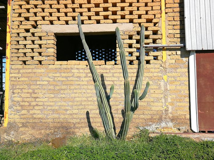 Plants growing outside building