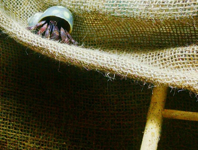 Animal Themes Close-up One Animal No People Nature Insect Hermit Crabs Hermit Pet Pet Photography Big John I'm crabby I'm 10