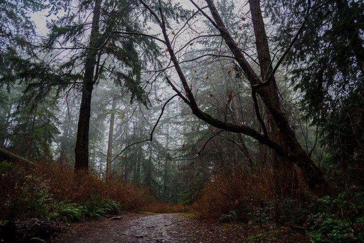 Winter Woods Nikon Nikonphotographer Nikonphotography Nikond750 EyeEm Nature Lover EyeEmNewHere Hellobc Vancouver Nature Outdoorlife PNWonderland PNW West Vancouver Lighthouse Park, Winter Woods Forest Tree Autumn Nature Fog Outdoors WoodLand Landscape Scenics Beauty In Nature First Eyeem Photo EyeEmNewHere