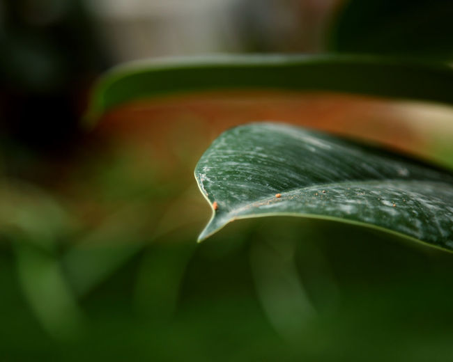 Green Plant Part Leaf Close-up Selective Focus Green Color No People Plant Growth Day Nature Beauty In Nature Freshness Water Drop Outdoors Focus On Foreground Wet Tranquility Vulnerability  Purity Blade Of Grass Dew Dahon Green Color Green First Eyeem Photo