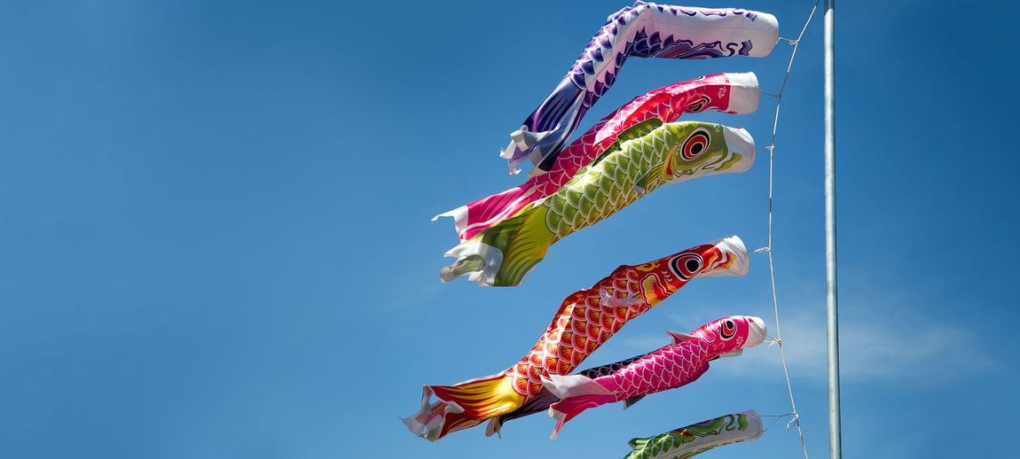 Carp fish flag hanking on pole in clearly sky on winding day in japanese decoration style
