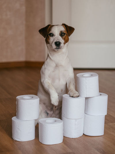 Portrait of dog with toilet papers roll