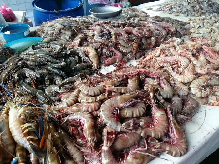 Fresh Prawn Prawn Fresh Prawn Sea Products Fresh Products Marine Sea Sabah Borneo Malaysia Kota Kinabalu