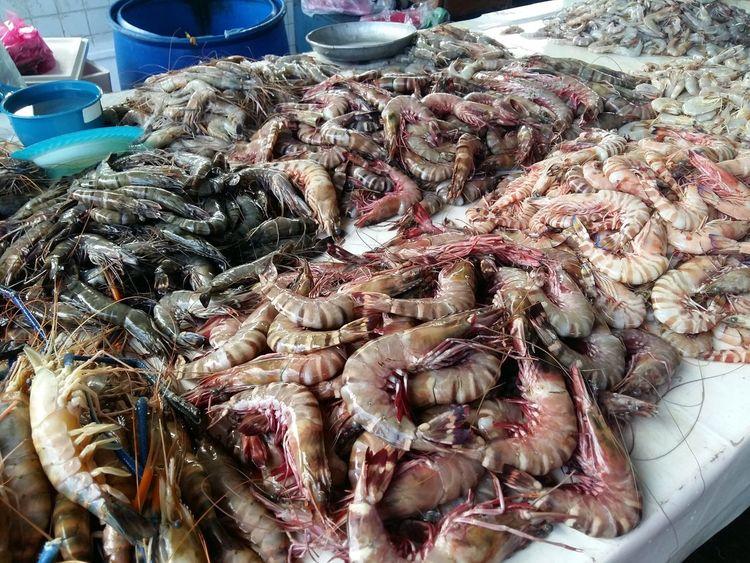 Fresh Prawn Prawn Fresh Prawn Sea Products Fresh Products Marine Sea Sabah Borneo Malaysia Kota Kinabalu