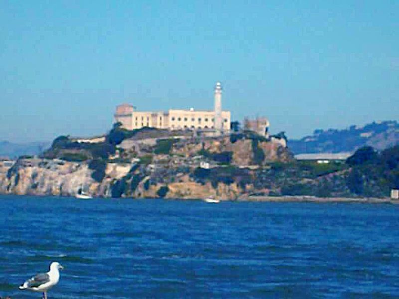 Water San Francisco Bay My Point Of View Tourist Attraction  This Week On Eyeem Taking Photos My Photography Alcatraz Alcatraz Island The Rock Prison Island Sea Gull