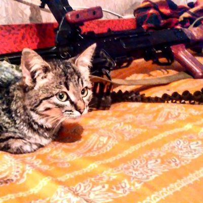 После вечернего боя котэ кот ПКМ лнр днр новороссия Cat Instacat Pkm Machinegun LPR LNR Novorossia