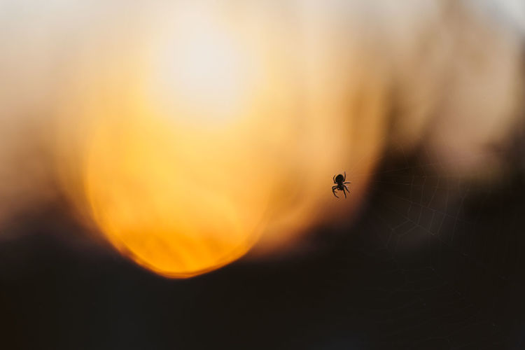 Autumn Halloween Orange Animals In The Wild Arachnid Creepy Evening Fall Moody Nature No People One Animal Outdoors Scary Spider Spooky Sunset