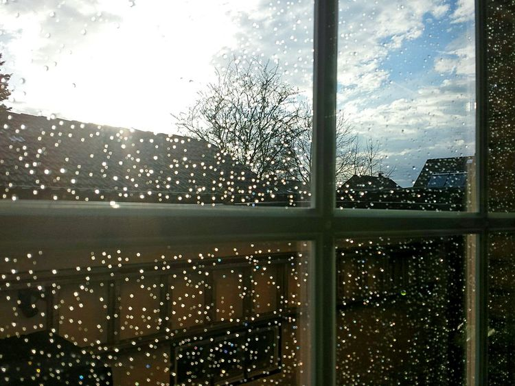 Rain Raindrops On My Window Ladyphotographerofthemonth Tree Window View Through My Window Still Life Photography Still Life Close-up Close Up Here Is My Home, Here I Live Here Belongs To Me Schillernd Twinkling Lights Blue Sky White Clouds Rainy Day Ladder Beliebte Fotos