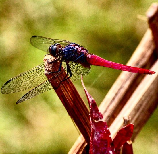 EyeEm Nature Lover Eyemphotography EyeEm Gallery Nature_perfection dragonfly nature On Door Step beauty The Nature Of Beauty nature never deceives