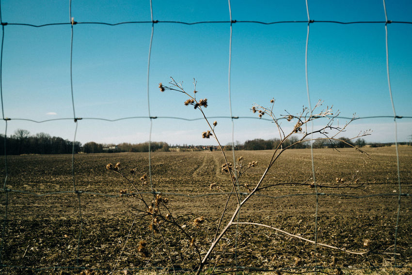 Fence at agriculture field Agriculture Field Agricultural Field Agricultural Land Beauty In Nature Blue Clear Sky Day Dry Environment Fence Field Growth Land Landscape Nature No People Non-urban Scene Outdoors Plant Scenics - Nature Sky Tranquil Scene Tranquility Tree