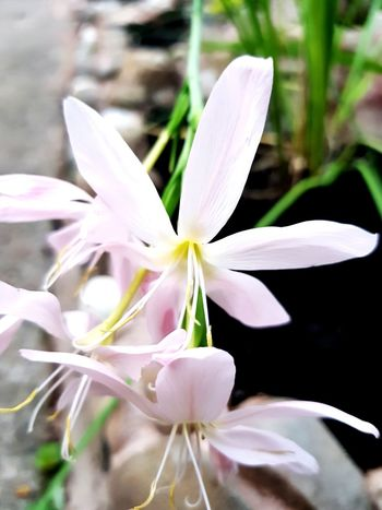 EyeEm Selects EyeEm Best Shots EyeEmNewHere EyeNatureLover Flower Head Flower Orchid Petal Scented Crocus Blossom Leaf Close-up Plant Stamen Flowering Plant