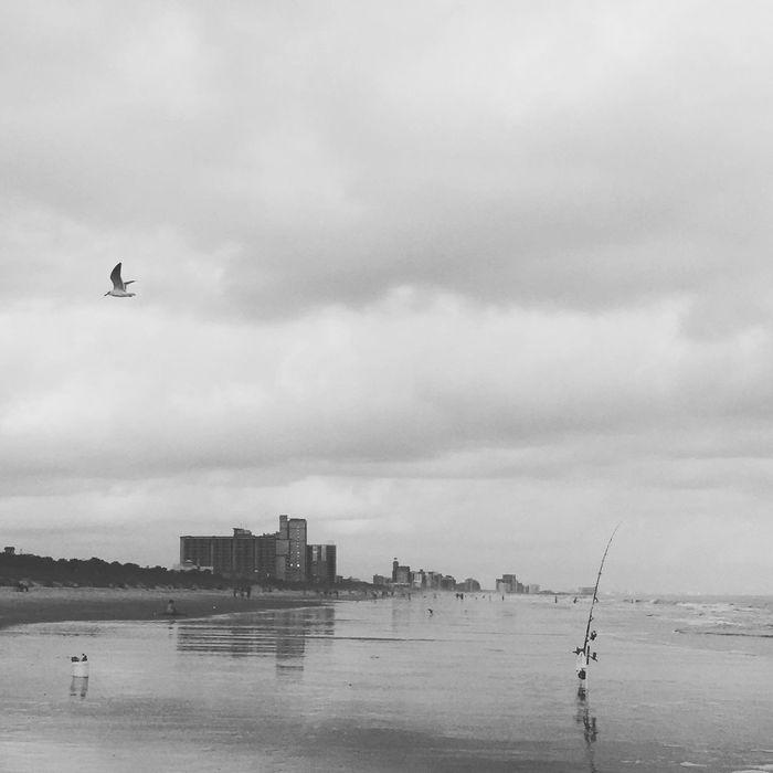 Blackandwhite Blackandwhite Photography Seascape Sea And Sky Seaside South Carolina Bird Photography