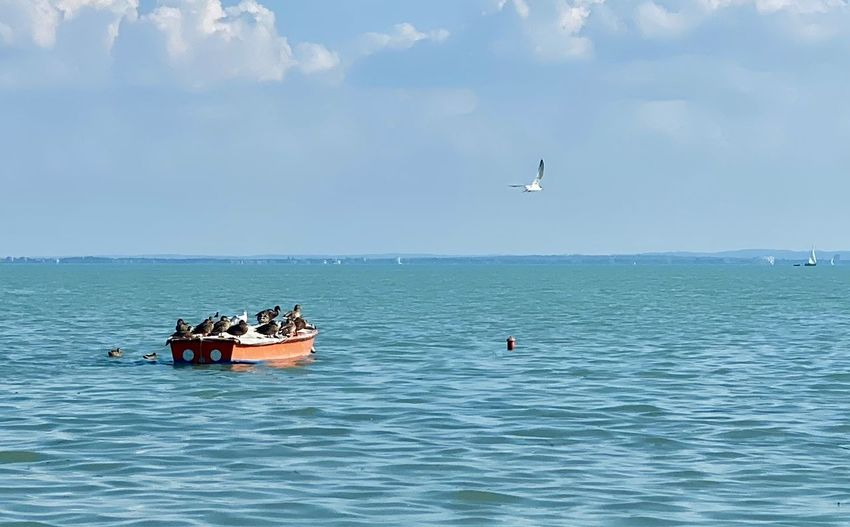 View of sailboat in sea